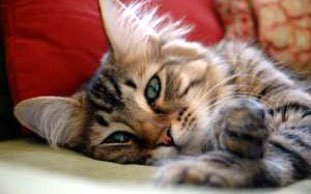 Katzenfell-Bommel an Mützen: Tierschützer decken Fell-Skandal auf