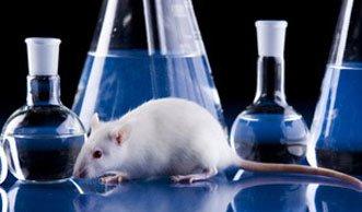 Mehr Tierversuche in der Schweiz