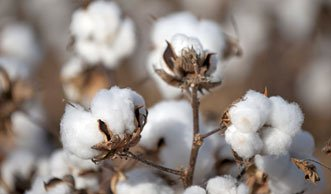 Pestizide in der Baumwolle: Warum Öko-Kleidung einfach besser ist