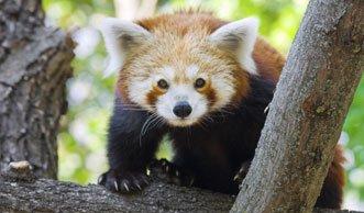 Artensterben: Die Überlebenschance dieser Tiere ist am geringsten
