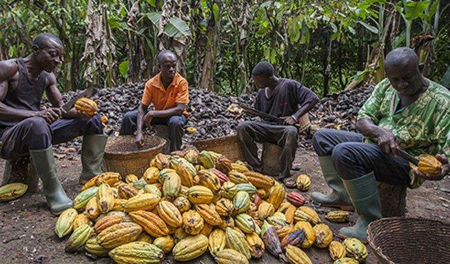 Wie entsteht echte Fairtrade-Schoggi, die auch schmeckt?