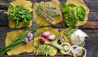 Auf einer Kräuterwanderung wichtige Heilpflanzen kennenlernen