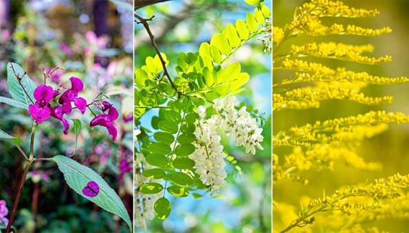 Wenn fremde Pflanzen zur wachsenden Bedrohung werden