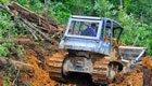 Wie Produkte aus Palmöl den Regenwald zerstören