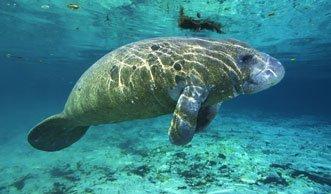 Nicht mehr vom Aussterben bedroht, und gerade deshalb gefährdet