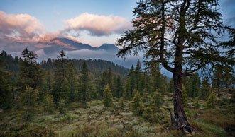 Warum scheiterte der zweite Schweizer Nationalpark an der Urne?