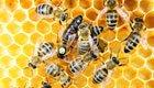 Urban Farming: Flughafen Chicago produziert eigenen Honig & Gemüse