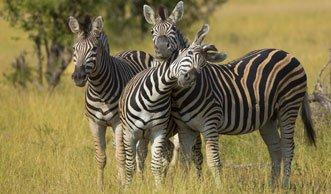 Artensterben lässt «leere Landschaften» zurück