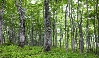 3 Billionen Bäume gibt es weltweit, aber es werden immer weniger