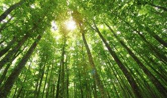 «Wood Wide Web» verbindet Wald: Bäume verfügen über soziales Netzwerk