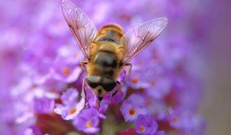 Kampf dem Bienensterben: Verbot für Pestizide geplant