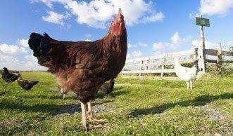 Studie beweist: Bio-Eier sind tatsächlich besser