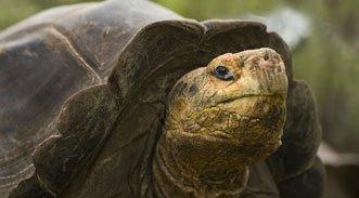 Nach einer kleinen Ewigkeit: Baby-Schildkröten auf Galápagos