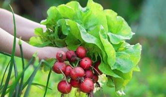 Schadstoffarmer Gemüsegarten: Pflanzen wenig belastet