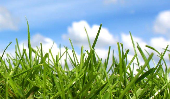 Gras als Energiequelle: Warum Ihr Rasen bald Autos antreiben könnte