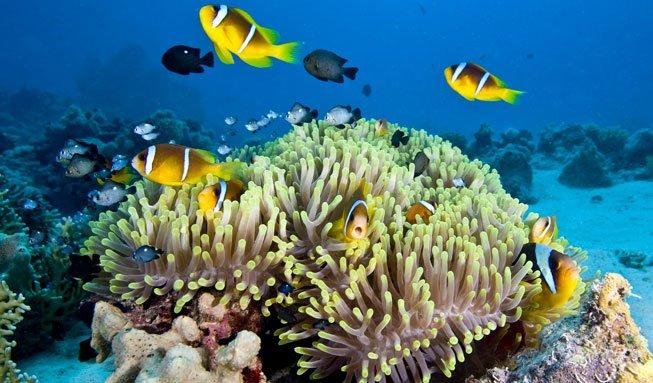 Great Barrier Reef kurz vor Kollaps: UNESCO fordert mehr Schutz
