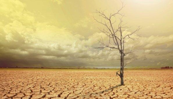 Klimawandel Folgen: 500.000 Tote aufgrund Lebensmittelmangel