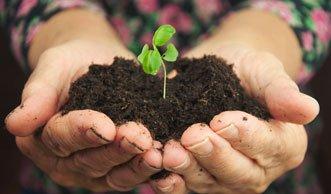Kompost statt Grab: «Grüne» Bestattung recycelt Verstorbene