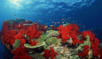 Klimaerwärmung führt zu weltweitem Massensterben der Korallen