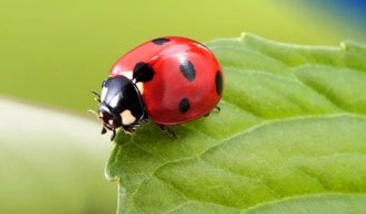 Artenvielfalt in Städten teils höher als auf dem Land