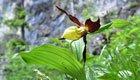 Klare Ziele für mehr Biodiversität müssen formuliert werden