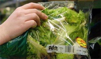 Salmonellen bleiben hartnäckig am Fertigsalat haften