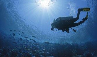 Fische bedroht: Weniger Sauerstoff macht Tieren zu schaffen