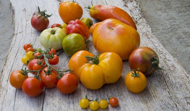 «Pflanz dir deine Stadt-Tomaten»: Jetzt kostenlos Samen bestellen