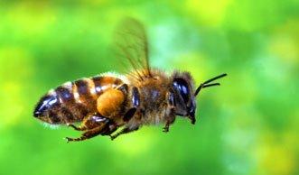 Neues Zuhause für Wildbienen mitten in Zürich