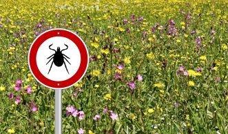 Warnsystem gegen Zecken: Neue App zeigt aktuelle Risikogebiete