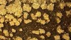Durch Zucker wird Goldgewinnung umweltfreundlicher