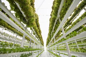 Wie Stadt-Farmen Millionen Menschen lokal ernähren