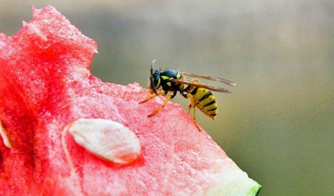 Natürlicher Insektenschutz: Hausmittel gegen Stechmücken und Co.