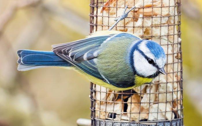 Vogelfutter Selber Machen So Futtern Sie Vogel Richtig Im Winter