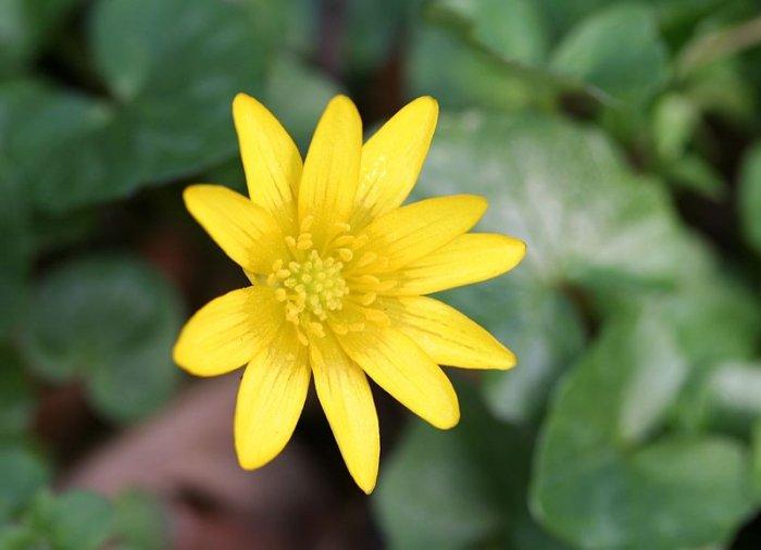 Fruhbluher Zum Fruhlingsblumen Pflanzen Geschutzte Stelle Finden