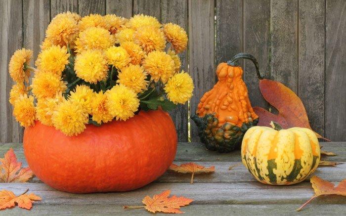 Beliebte Herbstblumen Was Bluht Auch Noch Im Herbst