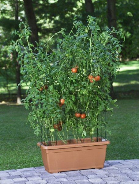 tomaten pflanzen wann ist die ideale pflanzzeit. Black Bedroom Furniture Sets. Home Design Ideas
