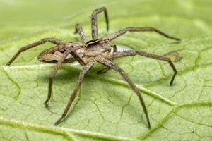 Spinnen in der Schweiz