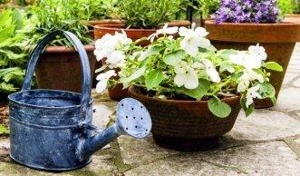 berwintern anleitungen und tipps f r gesunde pflanzen. Black Bedroom Furniture Sets. Home Design Ideas