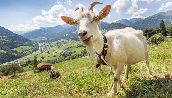 Schweizer Berggebiete unterstützen und erhalten