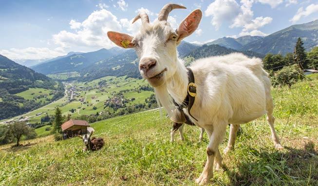 Wie Sie Schweizer Berggebiete unterstützen und erhalten