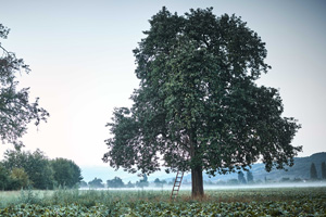 Hochstammbäume bringen mehr Biodiversität.