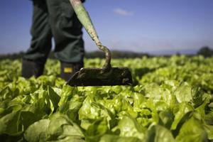 Bei Bio-Gemüse und -Obst sind Pestizide verboten