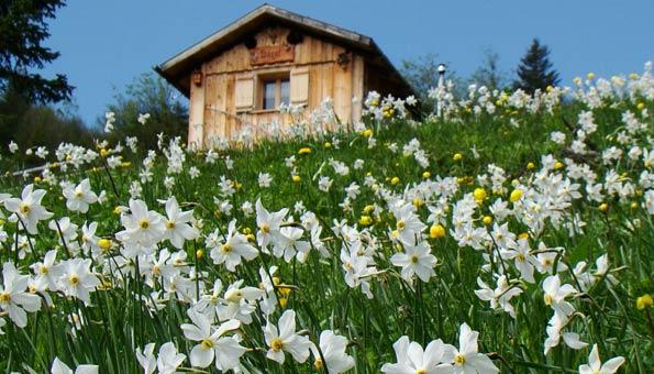 Ausflugsziele Graubünden: Die Top 9 Sehenswürdigkeiten: Narzissweg Seewis