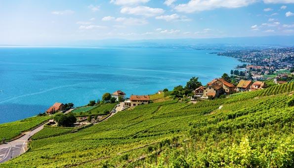 Weinbauterrassen Lavaux Genfersee
