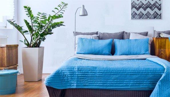 pflanzen im schlafzimmer: die top 9 für gesunde nachtruhe