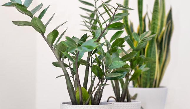 9 pflegeleichte Zimmerpflanzen, die vieles mitmachen