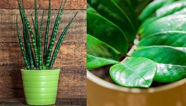 9 pflegeleichte zimmerpflanzen die vieles mitmachen. Black Bedroom Furniture Sets. Home Design Ideas