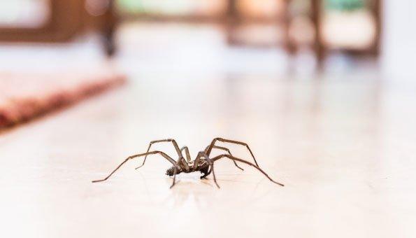 Spinnen vertreiben: Die 9 besten Hausmittel gegen Spinnen