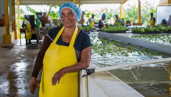 Bananen-Produzenten freuen sich über höhere Löhne